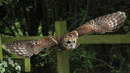 Owl Encounter at Lea Valley Park Farms