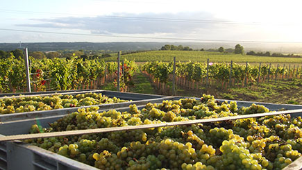 Garden of England Vineyard Escape for Two
