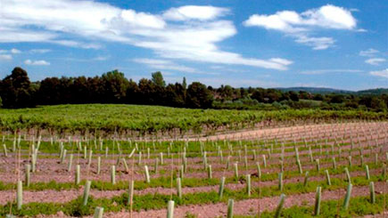Tour, Lunch and Wine Tasting for Two at Carr Taylor Vineyard,  East Sussex