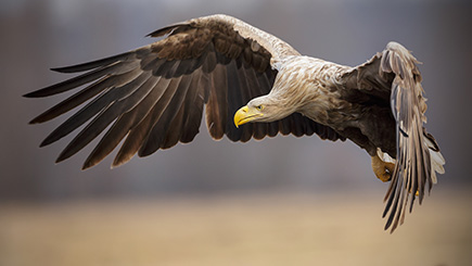Eagle Handling Day for Two