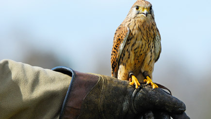 Bird Of Prey Falconry Day