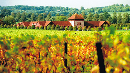 Vineyard Tour  Wine Tasting And Buffet Lunch For Two At Denbies Vineyard
