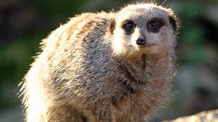 A Family Of Four Meet The Meerkats