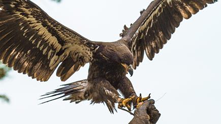 Birds of Prey Experience in Bedfordshire