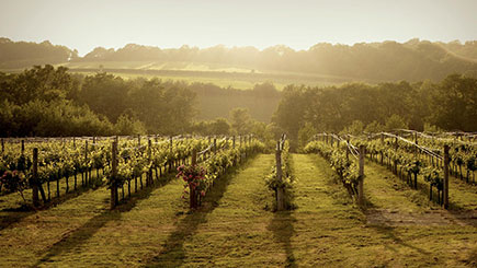 Sussex Vineyard Coach Tour with Lunch & Wine Tasting for Two
