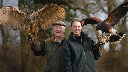 Hands-on Falconry Taster in Warwickshire