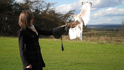 Bird of Prey Falconry in Northumberland