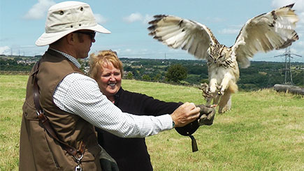 Half Day Falconry Experience