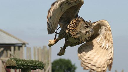 Ultimate Bird of Prey Falconry Day in Dorset