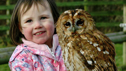 Kids Introduction For Two To Birds Of Prey