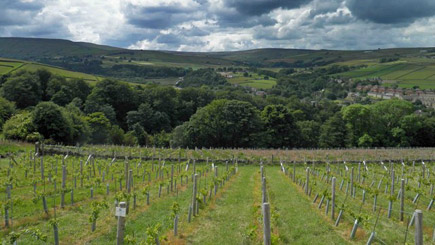 Vineyard Tour and Wine Tasting for Two at Holmfirth Vineyard