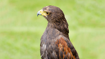 Bird of Prey Day in Herefordshire