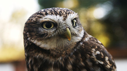 Introduction to Birds of Prey in Herefordshire