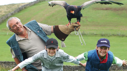 Bird of Prey Experience in Hampshire