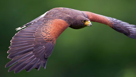 Bird of Prey Falconry Experience in Derbyshire
