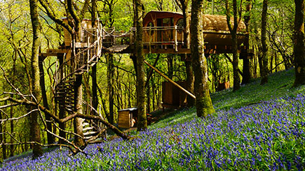 Treehouse Experience for Two