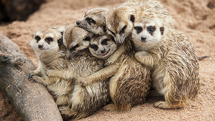 Meerkat, Ferret, and Owl Experience for Two in Cheshire