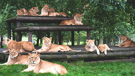Predators Encounter at Knowsley Safari Park