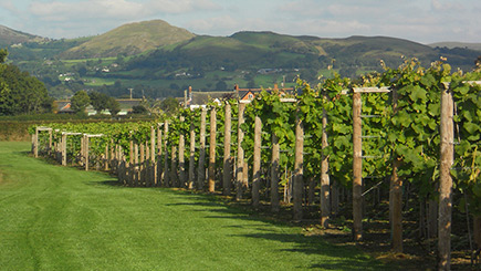 Vineyard Tour and Wine Tasting for Two at Kerry Vale Vineyard, Shropshire