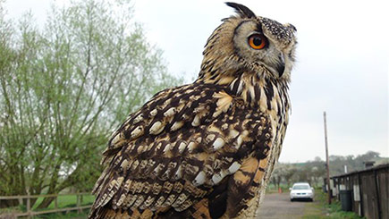 Owl Encounter in Suffolk