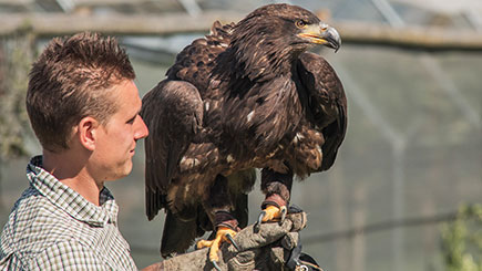 Discover Falconry, Oxfordshire