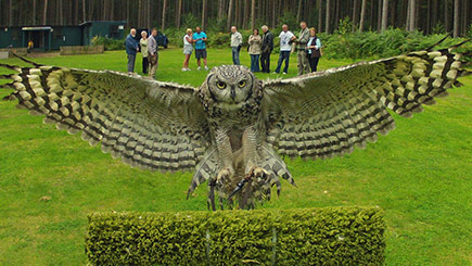 Owl Encounter In Derbyshire With Bb Falconry