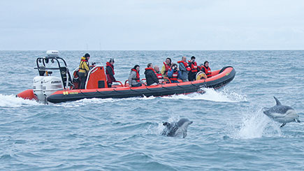 Sea Cave RIB Boat Trip in Padstow, Cornwall