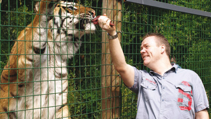 Feeding Big Cats In Hertfordshire (weekdays)