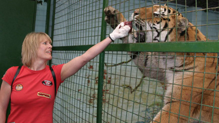 Feeding Big Cats in Hertfordshire