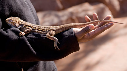 Private Reptile Handling Experience in Hertfordshire