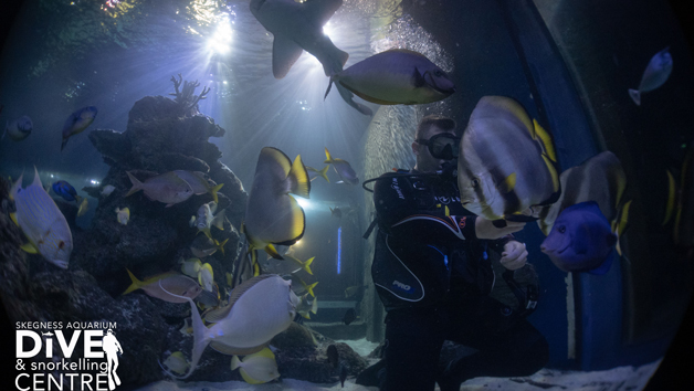 Scuba Diving With Sharks In Skegness