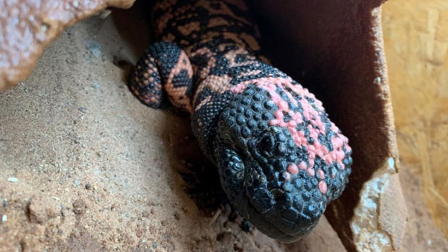Entry To Exotic Zoo With A One Hour Deadly Reptile Experience For Two