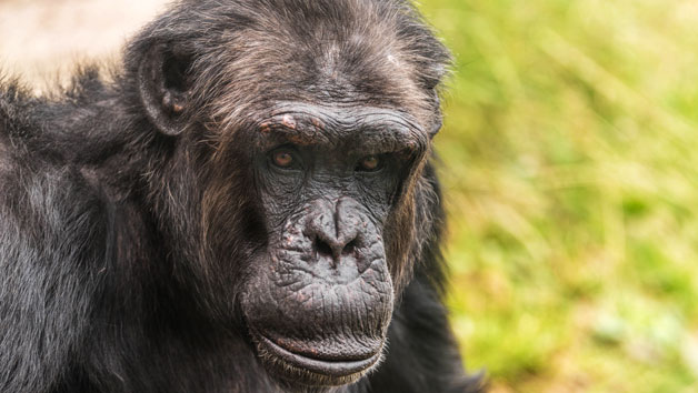 Entry To Welsh Mountain Zoo And Primate Experience For Two