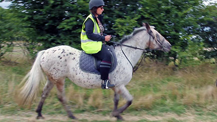 Horse Riding in Bedfordshire for Beginners