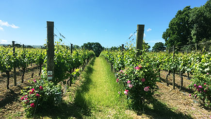 Sussex Vineyard and Cheese Coach Tour with Lunch and Wine Tasting for Two