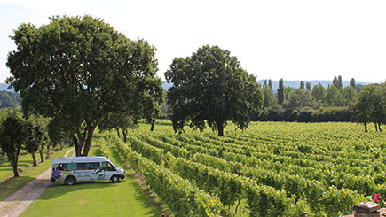 Sussex Vineyards Coach Tour With Lunch And Wine Tasting