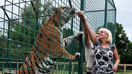 Weekday Big Cat Encounter At The Big Cat Sanctuary