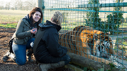 Weekday Ranger for a Day at The Big Cat Sanctuary