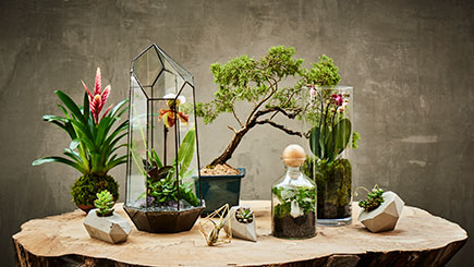 A Tropical Terrarium with Tool Making Masterclass in East London