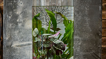 Jarrarium and Aquatic Landscape Masterclass in East London