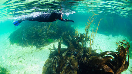 Swimming With Seals For Two In Oban  Scotland