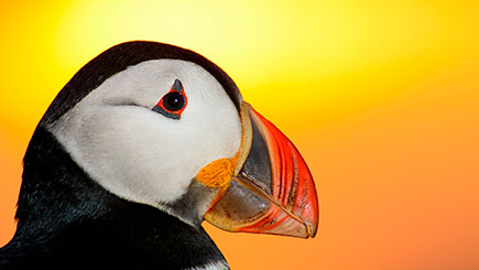 One Day Puffin Tour