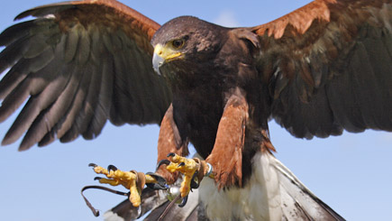 Bird of Prey Experience in Gloucestershire