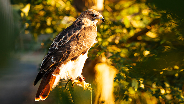 Two Hour Falconry For Two At Coda Falconry