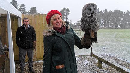 Owl Encounter At Falcon Days