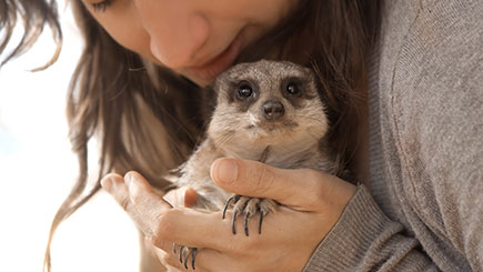 Click to view details and reviews for Meet The Meerkats Experience For Two.