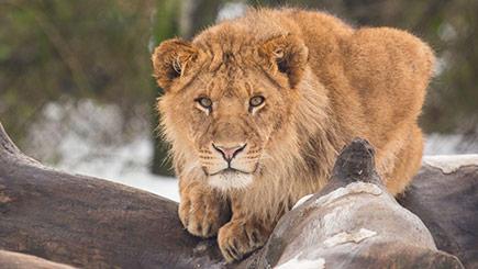 Animal Encounter At Knowsley Safari Park
