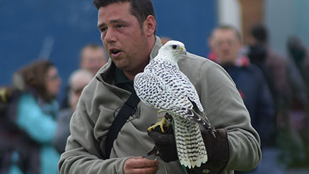 Discover Falconry For Two, Oxfordshire