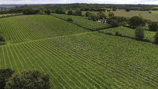 Wine Tasting With Tour For Two At English Oak Vineyard