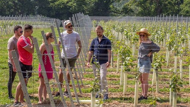 Vineyard Tour And Tasting At Hidden Spring Vineyard For Two